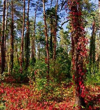 В лесу возле села Березняки