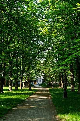 Парк в селе Будище