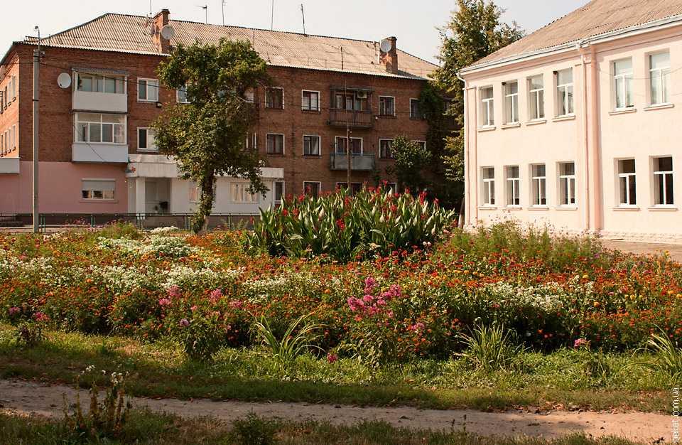 Цветы возле школы