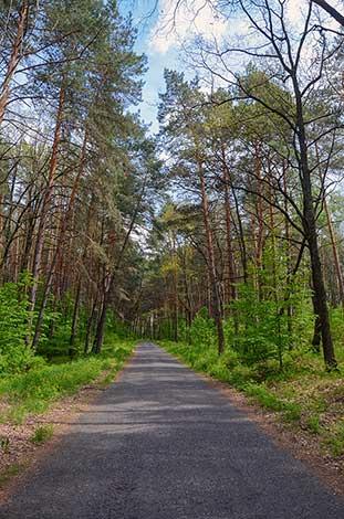 Дорога в Гуту Межирицкую