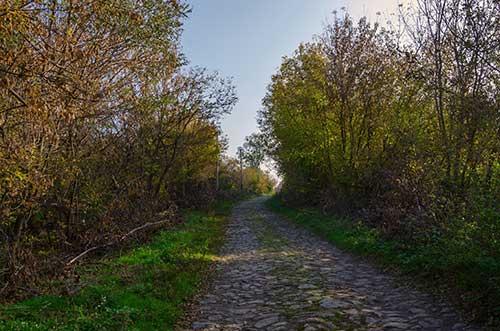 Многие дома в селе Ивановка брошены, улицы захватывают деревья и кусты