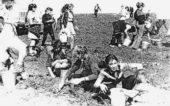 Ученики на сборе урожая в колхозе «Родина»
